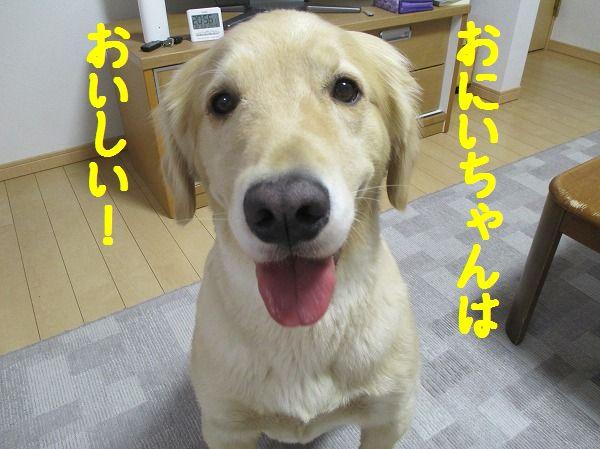 2014-10-5-ハチ-025