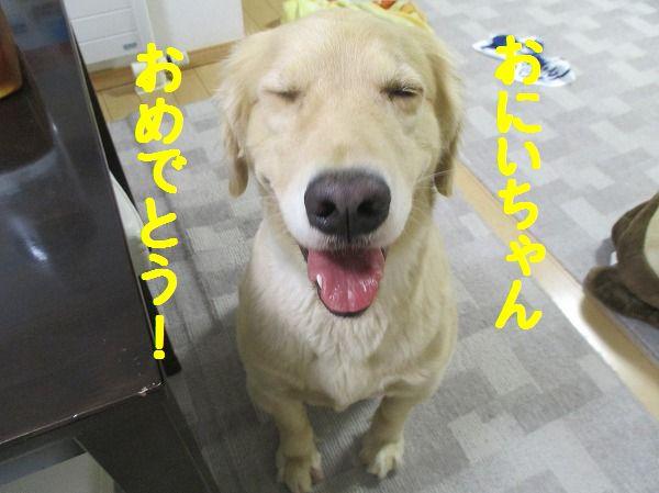 2014-10-5-ハチ-002