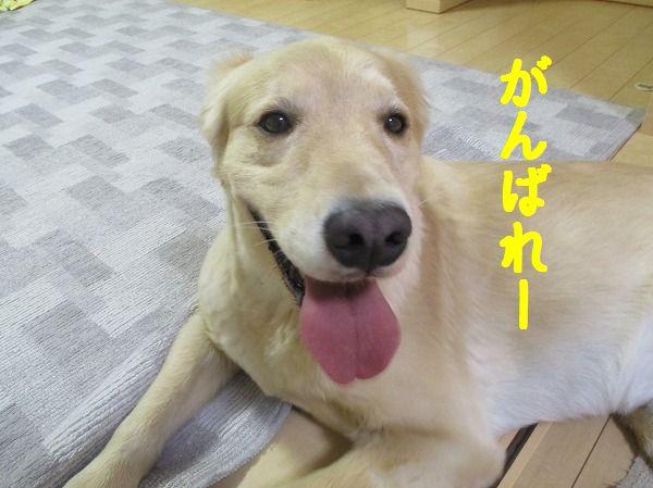 2014-10-7-ハチ-017