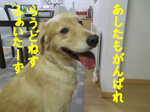 2014-10-11-ハチ-006