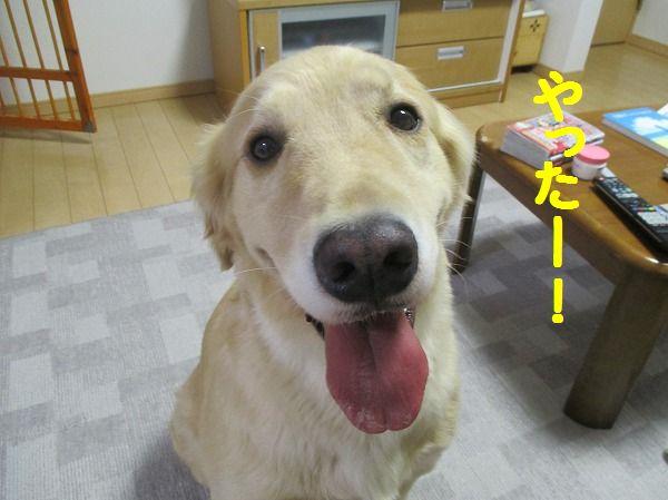 2014-10-14-ハチ-004