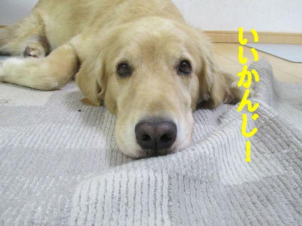 2014-10-17-ハチ-004