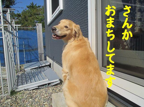 2014-10-15-ハチ-010