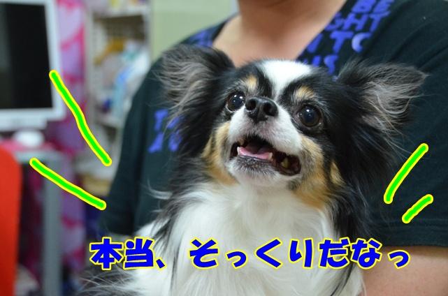 DSC_8989.jpg