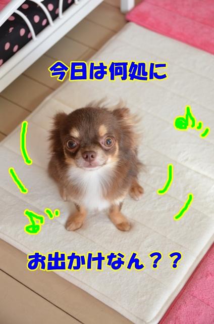DSC_9029.jpg