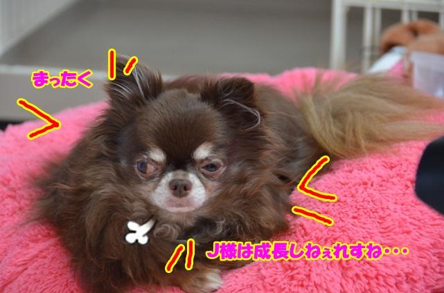 DSC_9382.jpg