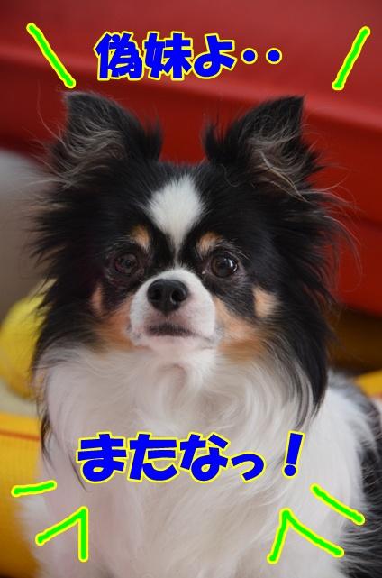 DSC_9391.jpg