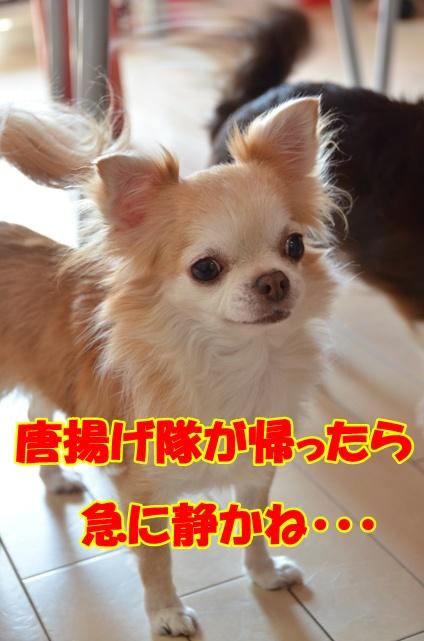 DSC_9393.jpg