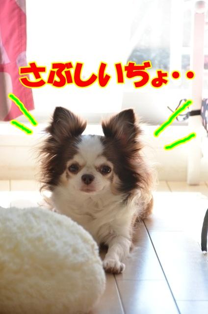 DSC_9395.jpg