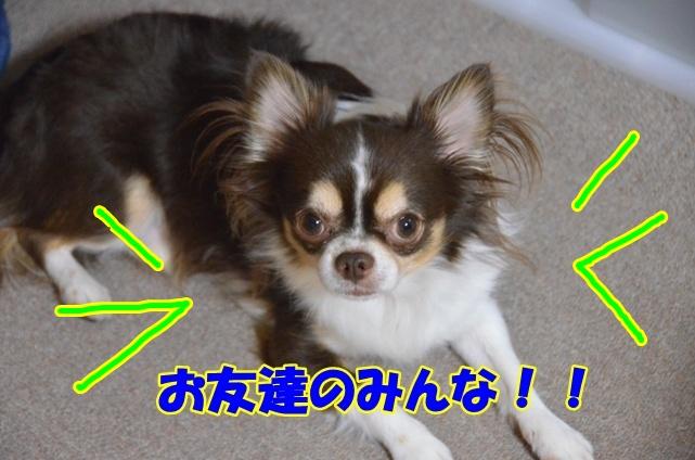DSC_9486.jpg