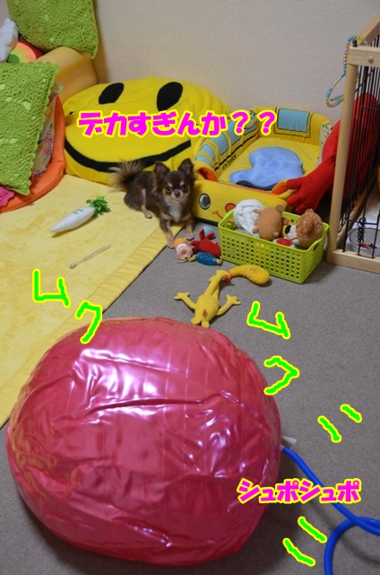 DSC_9492.jpg