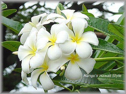 hawaii f