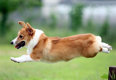 flyingdog1.jpg