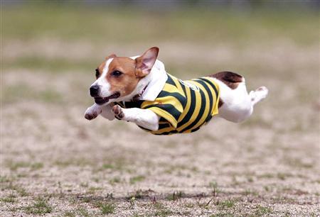 flyingdog2.jpg