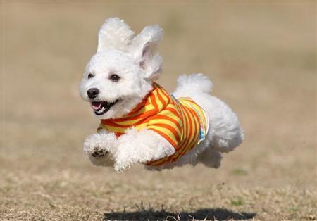 flyingdog3.jpg