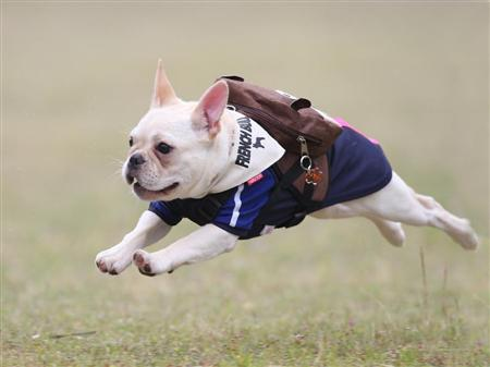 flyingdog4.jpg