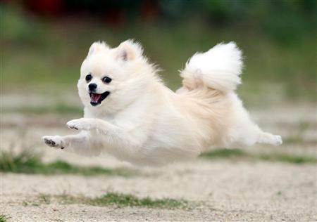 flyingdog5.jpg
