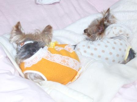 仲良く寝る2ワン