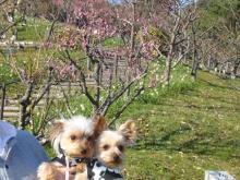 梅と2ワン