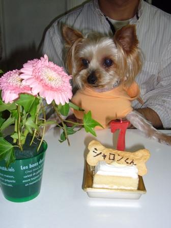 ケーキ前お花と