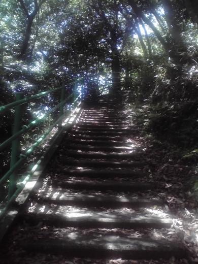 八幡山の遊歩道
