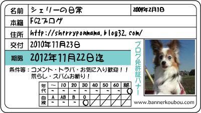 k20101123b1