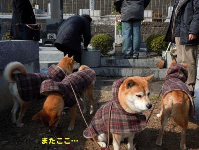 1_20110131191024.jpg