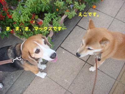 DSC00418_20100922233141.jpg