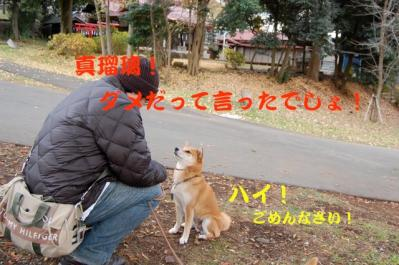 DSC_0046_20101216202046.jpg