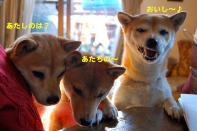 DSC_0060_20101221182521.jpg