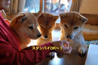 DSC_0074_20101221184340.jpg