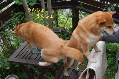 DSC_0100_20100427011557.jpg