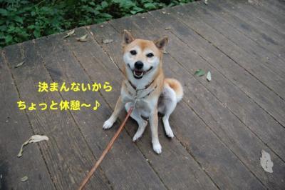 DSC_0112_20100927190717.jpg