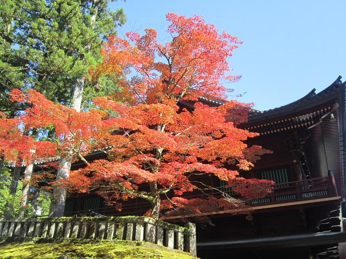 輪王寺護摩堂の紅葉
