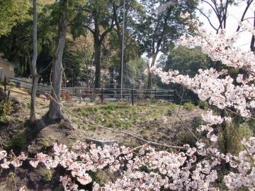 iセンター芝桜