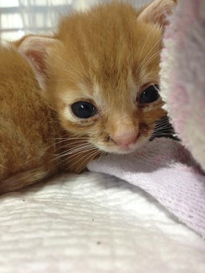 cat_etc117.jpg