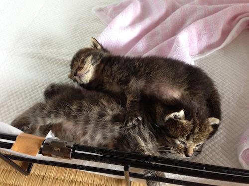 cat_etc120.jpg
