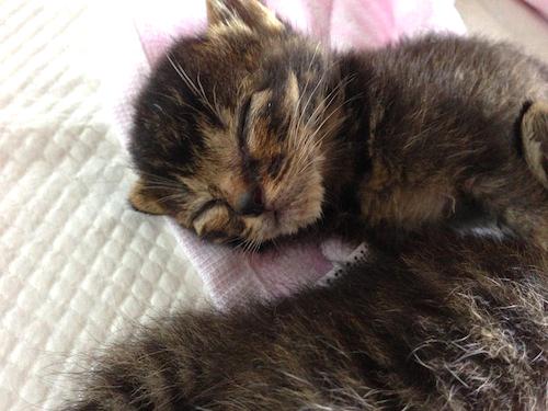 cat_etc123.jpg