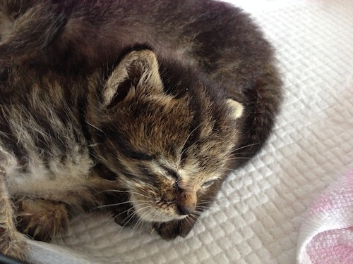 cat_etc124.jpg