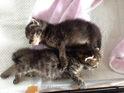 cat_etc125.jpg