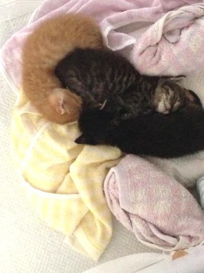cat_etc128.jpg