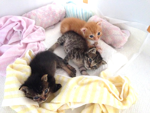 cat_etc129.jpg