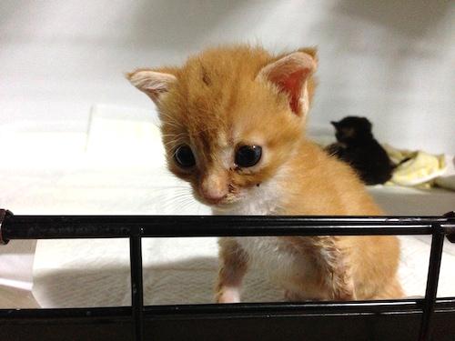 cat_etc133.jpg