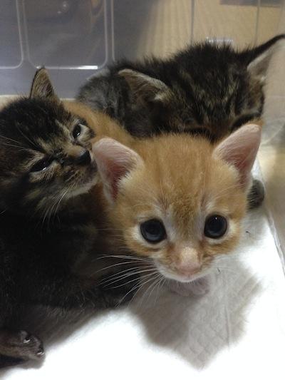 cat_etc136.jpg