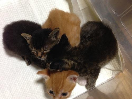 cat_etc137.jpg