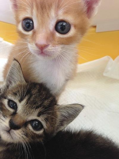 cat_etc140.jpg