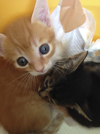 cat_etc141.jpg