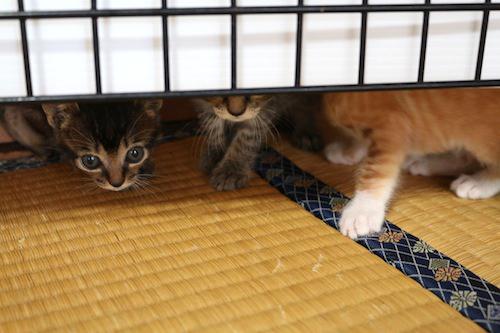 cat_etc142.jpg
