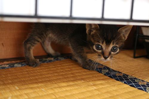 cat_etc143.jpg