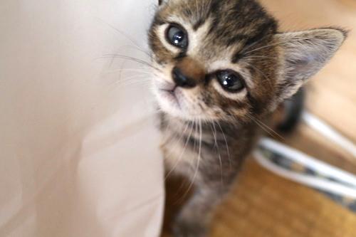 cat_etc144.jpg